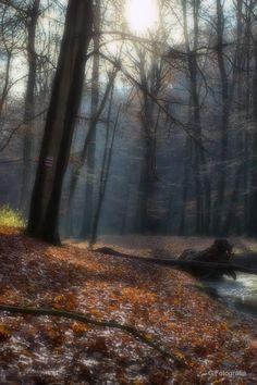 Zelovits Gábor Novemberi csoda Kicsit homályba borulnak a fények, a színek,s az érzések. Megváltozik a természet, megváltoznak a színei s köntöse. De kellemes benne járni, valami olyasmit tapasztal az ember mi lecsendesíti,megnyugszik,felfigyel a szépségre,mi eléje tárul csak a szellő mely hangot ád, a pillanatban mikor ott jársz miközben magadba rejted, azt a szépséget mit itt látsz! Több kép Gábortól: www.facebook.com/gzelovits Tarot, Country Roads, Tarot Cards