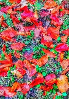 Photograph - Autumn Glory by Mimulux patricia No , Framed Wall Art, Wall Art Prints, Autumn Leaves, Fallen Leaves, Copper Color, Buy Prints, Creative Business, Illustrators, Artist