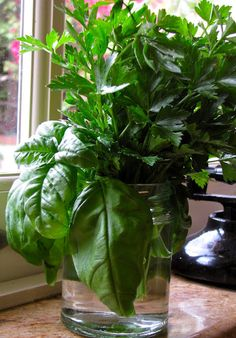 fresh herbs when you need them (without planting)