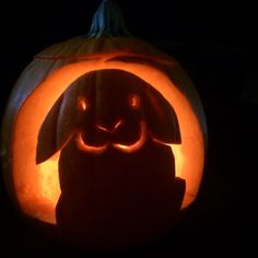 Bunny rabbit jack o lantern pumpkin carving mini lop Halloween carved