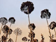 Perspektivenwechseln?  Es lohnt sich immer wieder unser Leben und unsere Ziele aus einer anderen Perspektive wahrzunehmen.    Die Blumen sehen hier fast so aus wie Bäume 🌳 Dandelion, Flowers, Plants, Worth It, Perspective, Switzerland, Dandelions, Florals, Planters