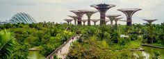 Jardin botanique Singapour (Asie)