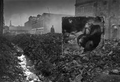 Alleyway with chimpanzee by Nick Brandt. In his grandly apocalyptic photo series Inherit the Dust, Nick Brandt takes life-size images of animals and places them in the African locations where they used to roam. Nick Brandt, Des Photos Saisissantes, Art Berlin, Grandeur Nature, Haunting Photos, Animal Habitats, Illustration, Photo Series, East Africa