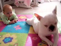 Dívány - Poronty - Cukiság: a kutya kúszni tanítja a babát French Bulldog, Dogs, French Bulldog Shedding, Pet Dogs, Bulldog Frances, Doggies, Bulldog French, French Bulldogs