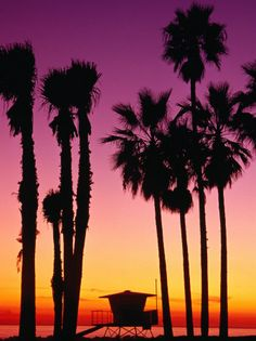 Palm Trees at Sunset, Venice Beach, Los Angeles, Los Angeles, California, USA Photographic Print at AllPosters.com