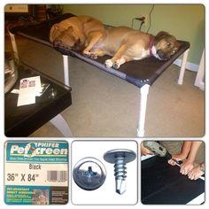 Raised Dog Beds, Elevated Dog Bed, Pallet Dog Beds, Dog Organization, Dog Pen, Pet Furniture, Animal Projects, Dog Daycare, Diy Stuffed Animals