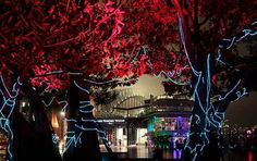Tree Activation - Vivid Sydney 2012