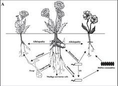 NCBI - root to root communication