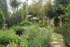 Grown in the Golden State: Tour Some of California's Most Beautiful Native Gardens | The Horticult