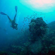 Como o maior sistema de recife de coral do planeta o Great Barrier Reef ou Grande Barreira de Corais em tradução livre chama a atenção pela exposição subaquática da vida marinha. Listado como Patrimônio Mundial da Unesco o recife é o lar de baleias golfinhos tubarões tartarugas e corais magníficos que são a casa de outras criaturas do mar. #greatbarrierreef #grandebarreiradecorais #unesco #australia #intercambionaaustralia #natureza by latinoaustraliabr http://ift.tt/1UokkV2