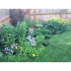 Backyard garden gardening