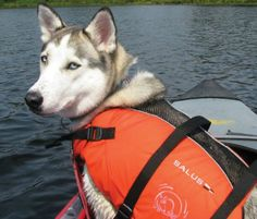 List of the best dog life jackets