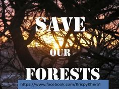 Save Our Forests Make the earth a better place to live in.  https://www.facebook.com/KricpyKhera1  #kricpyKhera #kricpy #khera #noise #pollution #earth #stop #Environment #girlchild #save #trees #wildlife #city #green #clean #rainforests #bigcats #elephants #review #Naturecomplaint #natureCase #rain #forest #smoking
