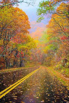 Rainy day on the Blue Ridge Parkway (near Asheville, North Carolina)
