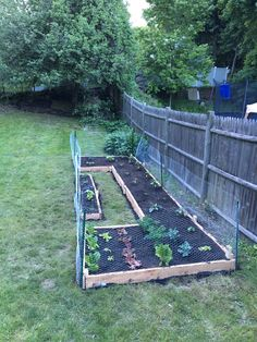 I moved my garden and built a raised bed over Memorial Day weekend