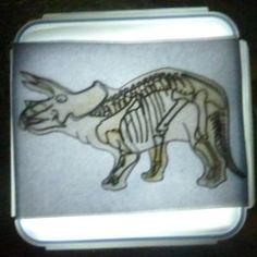 Rtg triceratopsovej kostry.