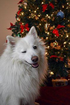 Happy Holidays ;)