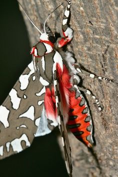 I normally really dislike moths, but I have to say this one is really pretty. :)