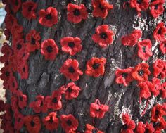 Diced Imagery --- felt poppies pinned to a tree -- to remember