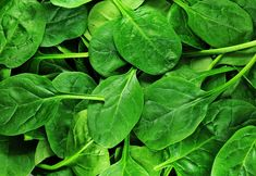 Photo about Fresh green spinach leaves background. Image of drop, texture, fresh - 18539211 Foods Good For Arthritis, Classroom Newsletter Template, Newsletter Templates, Spinach Benefits, Leaf Skeleton, Inflammation Causes, Green Veggies, Soy Protein, Food Security