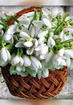 Beautiful Rose Flowers, Beautiful Flower Arrangements, Exotic Flowers, Fresh Flowers, Spring Flowers, Beautiful Gardens, White Flowers, Beautiful Flowers, Arte Floral