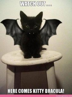 Watch out . . ., Here Comes Kitty Dracula! |