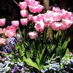 Feliz sábado ♥ Que Deus ilumine seu final de semana para que muitas alegrias aqueçam seu coração!