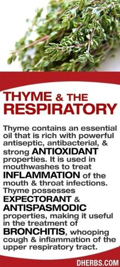 Thyme contains an essential oil that is rich with powerful antiseptic, antibacterial, & strong antioxidant properties. It is used in mouthwashes to treat inflammation of the mouth & throat infections. Thyme possesses expectorant & antispasmodic properties, making it useful in the treatment of bronchitis, whooping cough & inflammation of the upper respiratory tract. #dherbs #healthtips by wteresa