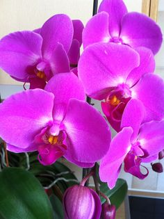 my Orchid collection Plants, Photos, Collection, Flowers, Pictures, Plant, Planets