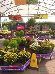 The Garden Centre Group - Wyevale - Shenstone - Lichfield - Garden Centre - Horticulture - Outlet - Variety Retail - Lifestyle - Layout - Landscape - Customer Journey - Visual Merchandising - www.clearretailgroup.eu