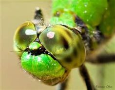 macro photography - Insect - Bing Images