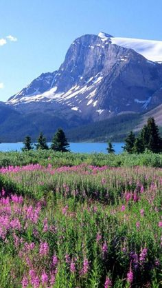 Canadian Rockies, Mount Robson, Alberta, British Columbia, Canada