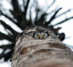 neat photo of a photographer looking up while the owl looks down  :o)