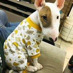 """These are my jammies.  I'm just waiting for my bedtime ""story!"
