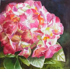 hydrangea watercolor paintings   Red Hydrangea Painting in watercolor , Rote Hortensie in Aquarell