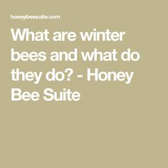 What are winter bees and what do they do? - Honey Bee Suite