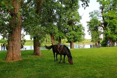 Karlovac is a city in Croatia situated on the four rivers (Kupa, Korana, Dobra and Mrežnica). It abounds with parks. This picture was taken in a park beside the river Korana.