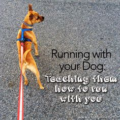 Running with your Dog: Teaching them how to run with you!