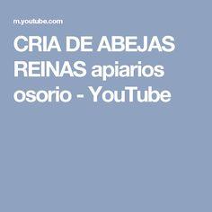 CRIA DE ABEJAS REINAS apiarios osorio - YouTube