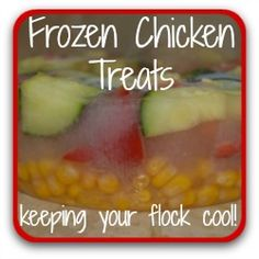 Keep your flock cool in summer with this tasty, healthy treat. What Can Chickens Eat, Herbs For Chickens, Raising Backyard Chickens, Backyard Chicken Coops, Keeping Chickens, Chicken Treats, Healthy Chicken, Chicken Items, Meal Worms