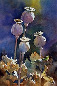 """Sunlit Poppy Seed Heads,"" watercolor by Ann Mortimer. Watercolor And Ink, Watercolor Flowers, Watercolor Paintings, Watercolours, Art Aquarelle, Illustration Blume, Guache, Art Floral, Botanical Art"