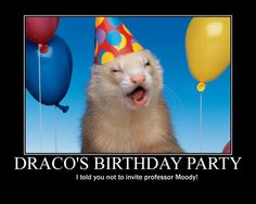 Why did this make me laugh so hard? Oh ya, Ferret-boy is a ferret on his birthday, and a Deatheater invited an Auror to their house.