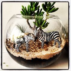 Container Gardening - New ideas Terrarium Diy, How To Make Terrariums, Succulent Planter Diy, Air Plant Terrarium, Succulent Gardening, Planting Succulents, Container Gardening, Planting Flowers, Cacti Garden