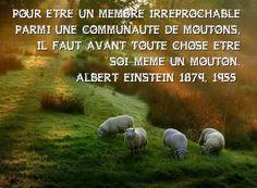 """Albert Einstein - """"Pour être un membre irréprochable parmi une communauté de moutons.."""""""