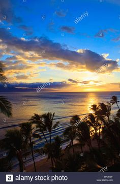 sunset at kaanapali beach in Maui through the coconut palms Stock Photo
