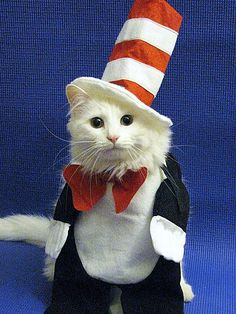 Cat in Hat @ Ryan Martin Jeral LMAO