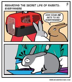A bun of the world … Bunny Meme, Funny Bunnies, Cute Funny Animals, Bunny Bunny, Bunny Rabbits, Secret Life Of Rabbits, Bun Bun, Buns, New Zealand Rabbits