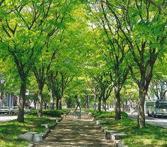地元の植物といえばやはり、定禅寺通りのケヤキ並木。仙台のシンボルのひとつとも言えるだろう。