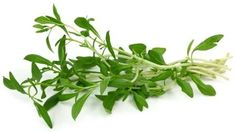"""Savory is one of the herbs used in the traditional French """"herbes de Provence"""" and is also added to soups and stews."""