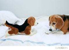 Dog photo of the week: Daisy the Beagle - Anna Kuperberg